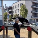 Belém em Ação – Parques Caninos